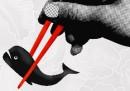 Gli eco-pirati sfidano le baleniere giapponesi