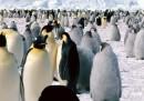 Contare i pinguini dallo spazio