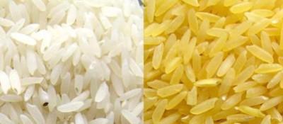 """""""Golden rice"""": un Ogm può salvare milioni di vite"""