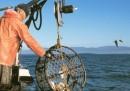 La truffa dei falsi pescatori