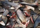 Teniamo agli squali