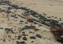 Il petrolio nelle spiagge di Goa