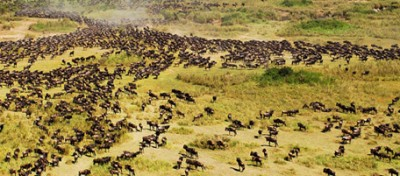 Così distruggeranno il Serengeti