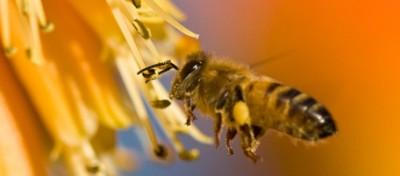 Cosa sta uccidendo le api