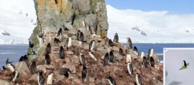 Google lancia Street View tra i pinguini