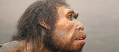I dieci svantaggi dell'evoluzione