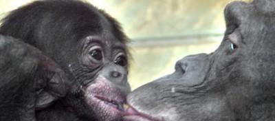 Le dieci più grandi scoperte della zoologia