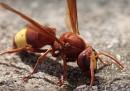 Le vespe a energia solare