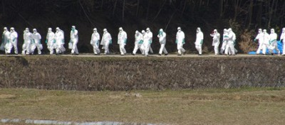 Ritorna l'influenza aviaria, in Giappone