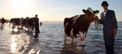 Mucche surrealiste