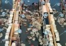 In biblioteca dopo il terremoto (foto)