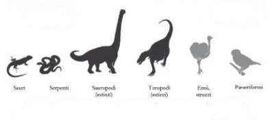 Che cos'è l'evoluzione?