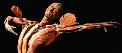 Esplorando il corpo umano
