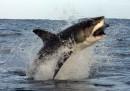 Le foto dello squalo bianco