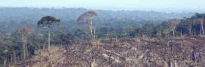 Come stanno le foreste