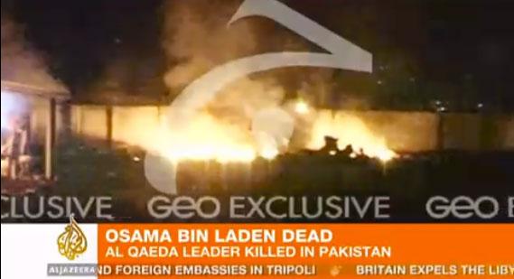 Osama bin laden morto il post for Criceto morto