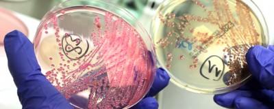 Cosa sappiamo delle infezioni da E. coli