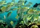 Le specie marine rischiano