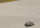 L'aeroporto JFK bloccato dalle tartarughe