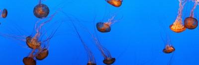 Il mito della pipì sulle punture di medusa