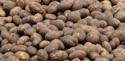 Svelato il genoma della patata