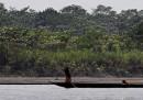 Quanto vale una foresta pluviale?
