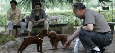 Ai cinesi piacciono i cani