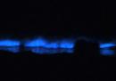 Le alghe fosforescenti che illuminano le onde