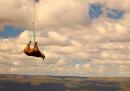 Rinoceronti volanti
