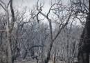 L'incendio nell'Australia occidentale