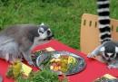 Il Ringraziamento dei lemuri