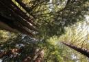 Un giro in 70 parchi della California, per l'ultima volta