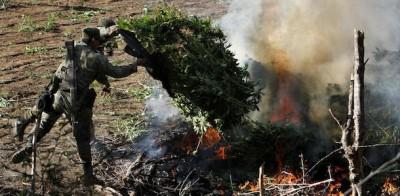 La marijuana bruciata in Messico