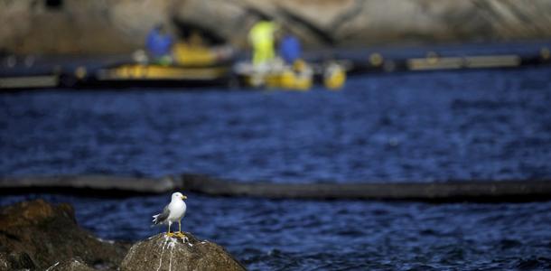 Technicians work as a sea bird stands du