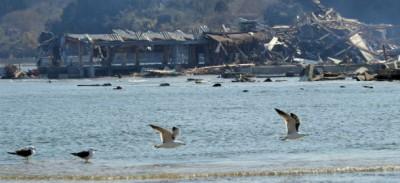 Gli uccelli di Fukushima
