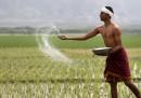 Un contadino indiano