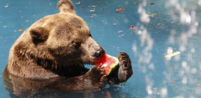 Vita da orsi