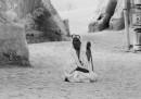 Il cinema del deserto