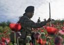 Le foto delle piantagioni di papaveri distrutte in Guatemala