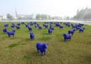 Pecore blu e altri animali