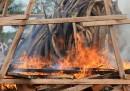 L'avorio bruciato in Gabon