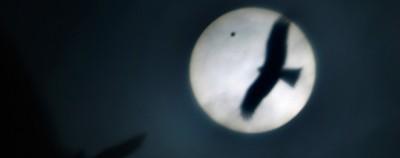 Le foto del transito di Venere
