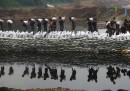 Continuano le alluvioni in Cina