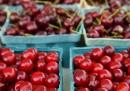 Come si coltivano le ciliegie
