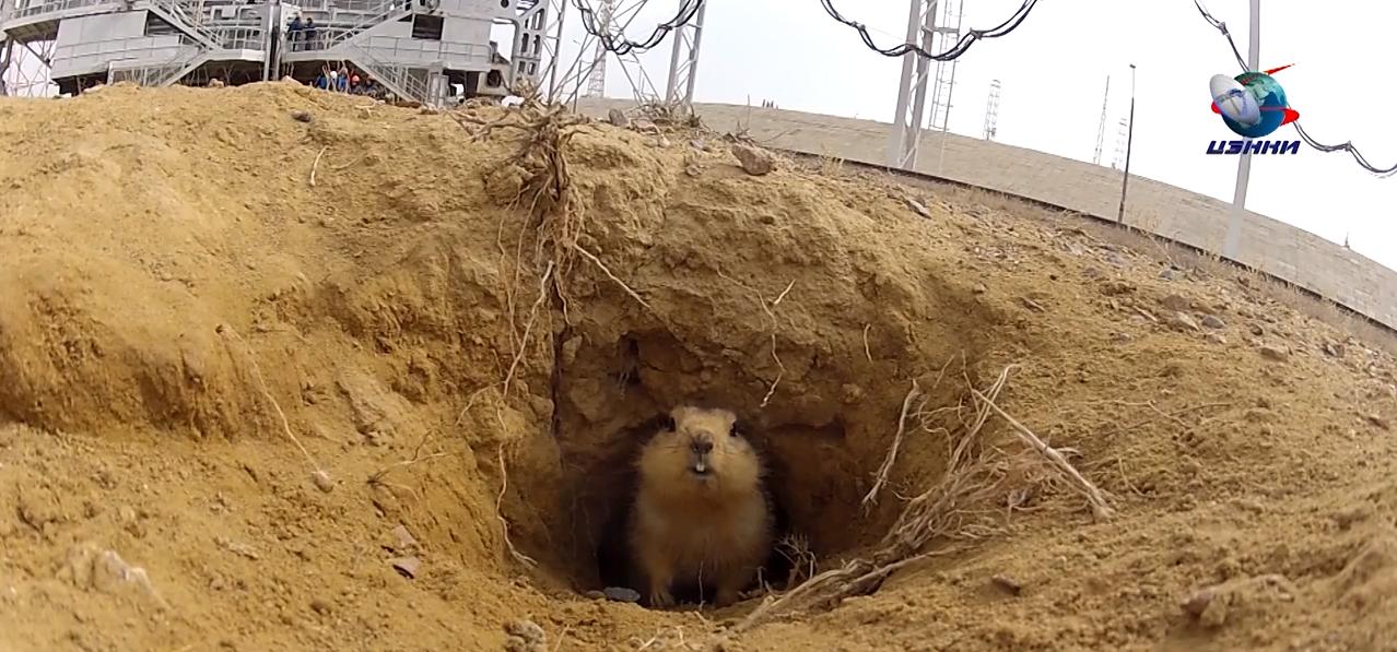 Lo scoiattolo del cosmodromo di baikonur il post for Le navicelle spaziali