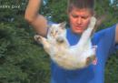 Perché i gatti atterrano sempre in piedi