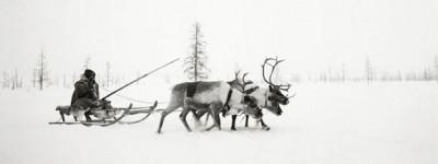 La vita nell'Artico