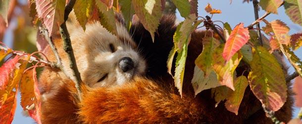 Si sta come d 39 autunno il panda rosso il post for Immagini autunno hd