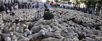 Le duemila pecore nel centro di Madrid