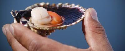 Che rumore fa un mollusco?